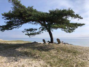 Stolarna mot havet – Nr 2 av 2 ex. 1 SÅLD