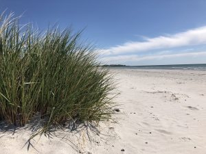 Gräs i sand