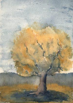 Träd kväll