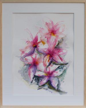 Cerise lilja